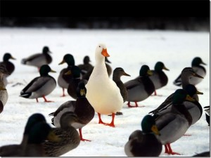 pictureofduckstandingoutinthecrowd thumb 300x225 How Do You Stand Out in a Crowded Field?