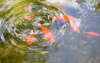 Learn how to fish below the surface of the pond for the best candidates for your open position